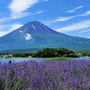 Brain, Memory & Focus