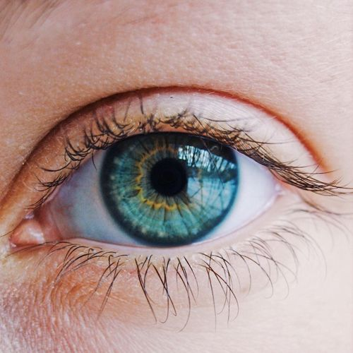 Eye Health and Gut Health Linked