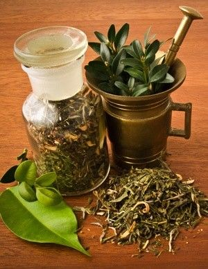New Study Shows Green Tea Extract Helps Metabolism and Body Clocks