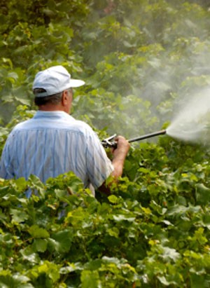 Chemical Soup: Pesticide Adjuvants and Low Chemical Exposures Proving Dangerous