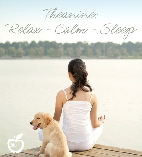theanine helps relaxation